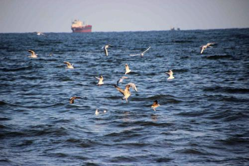 关于听涛观海的抒情散文