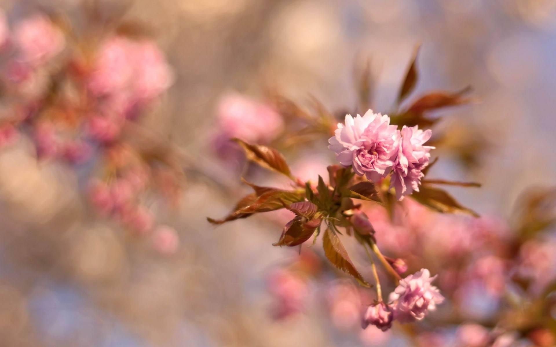 成长励志语录人生情感说说:学会释然,然后才能感觉到温暖和爱