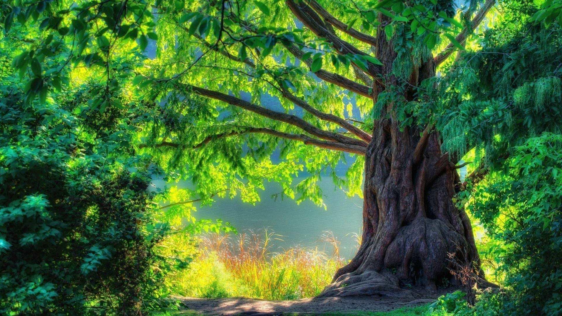 人生抒情散文欣赏:我快乐,我是一棵树