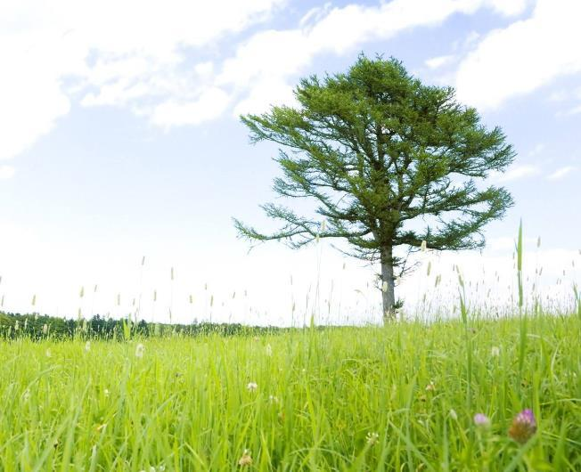 实现理想的成长正能量语录:可以说累,但不能停止