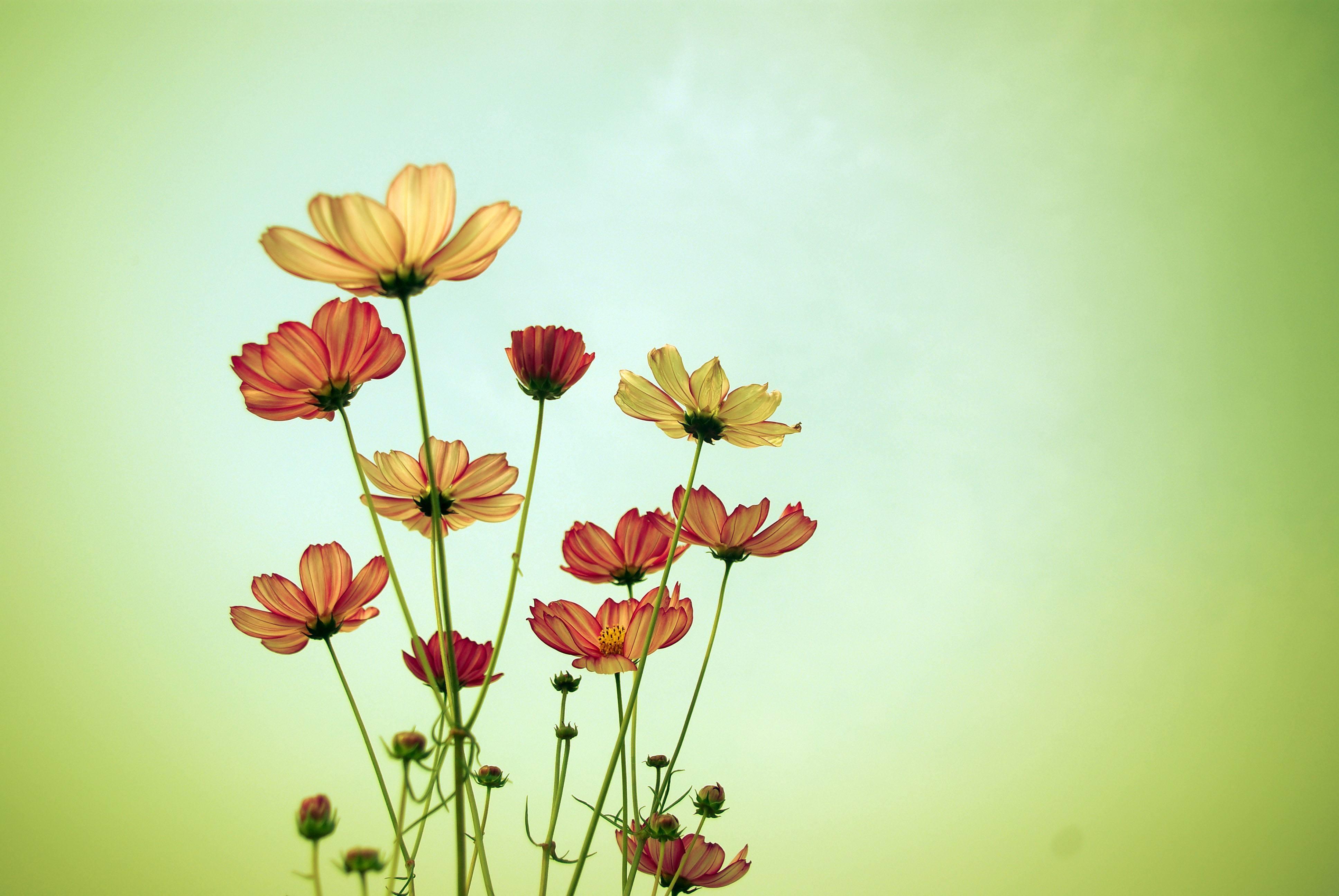 致自己的人生情感个性语录:长大之后发现,自己才是最了解自己的人