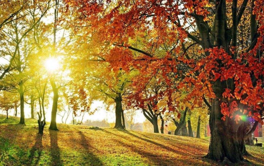关于秋冬美景的散文:蜀州的秋冬