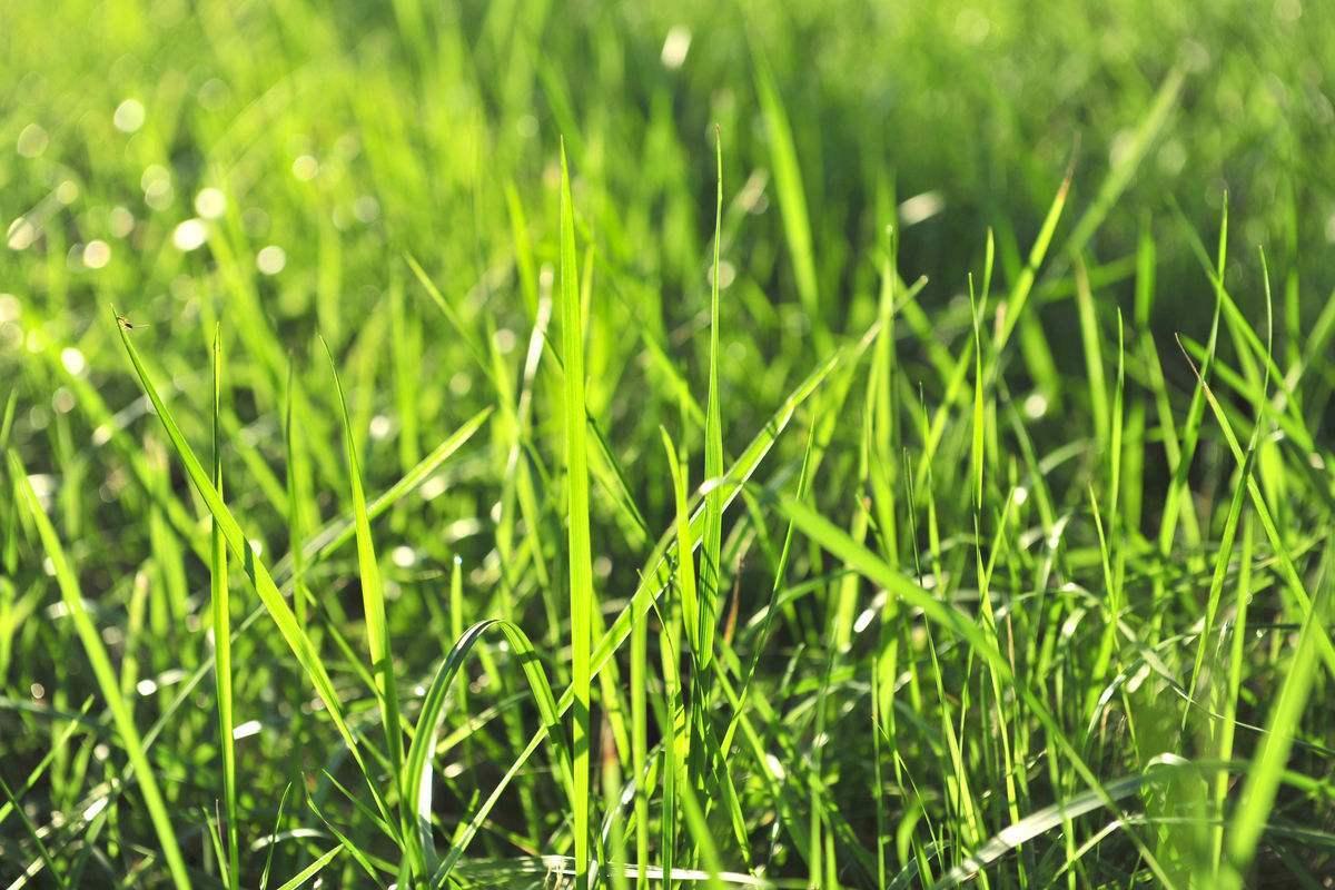 关于冬天的散文欣赏:冬天的小草