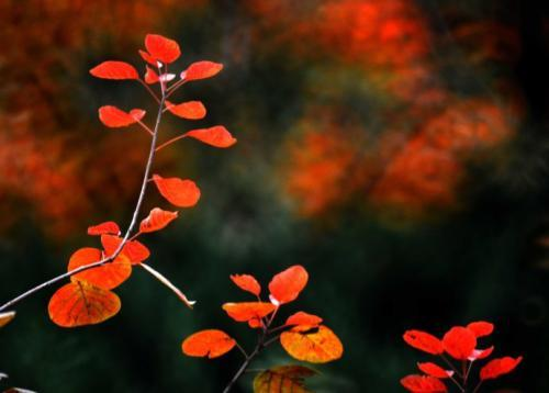 秋的味道小学生作文500字写景作文