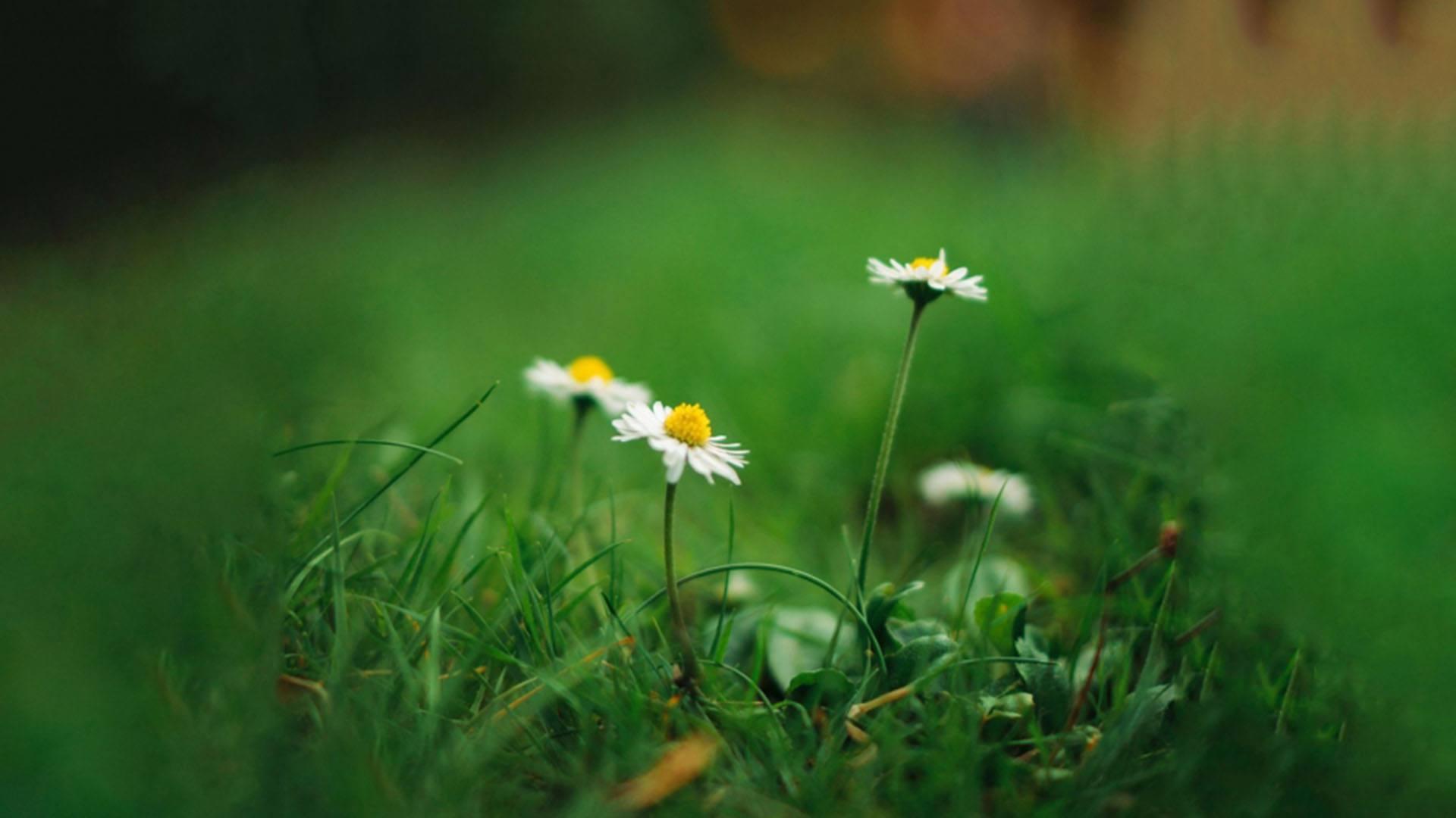 感恩成长的正能量情感说说语录欣赏