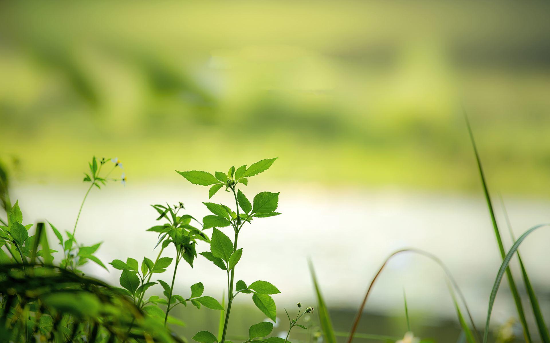 心情励志感悟生活的说说:要对未来充满希望,努力就不会太差的