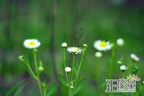 情感散文人生哲理:一切事物让它自然生长