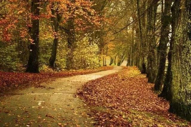 随笔散文欣赏:晚秋的风,吹起初冬