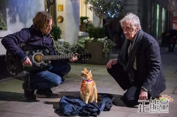 流浪猫鲍勃观后感范文欣赏:良伴如斯