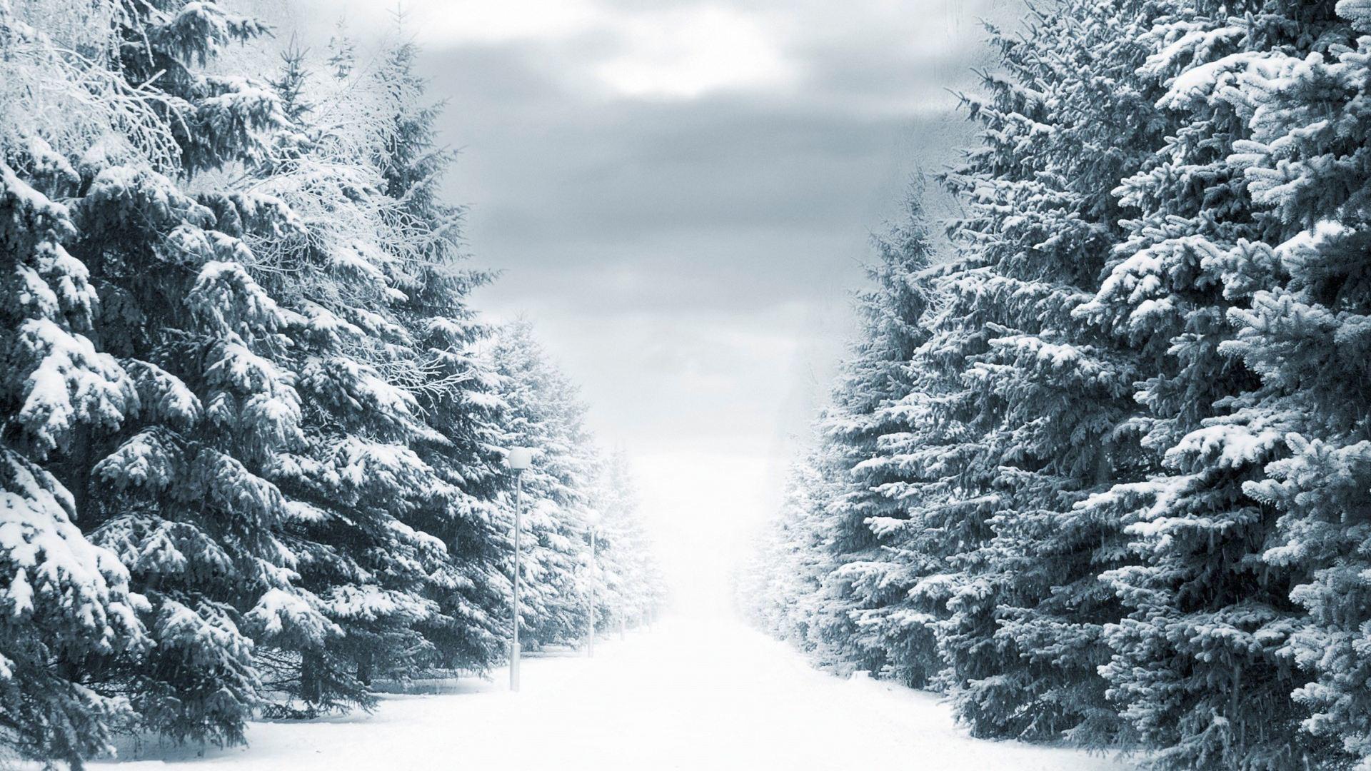 有关冬雪的抒情散文:雪中漫步