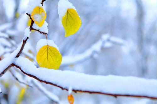 有关初雪的优美散文:初雪如梦