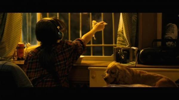 狗十三观后感:敏感绝不脆弱,争取却不争夺