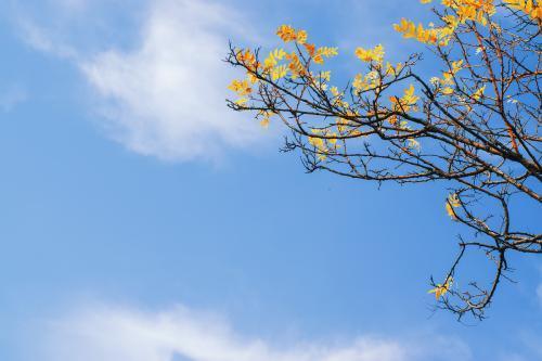 关于秋的优美散文:繁秋本色