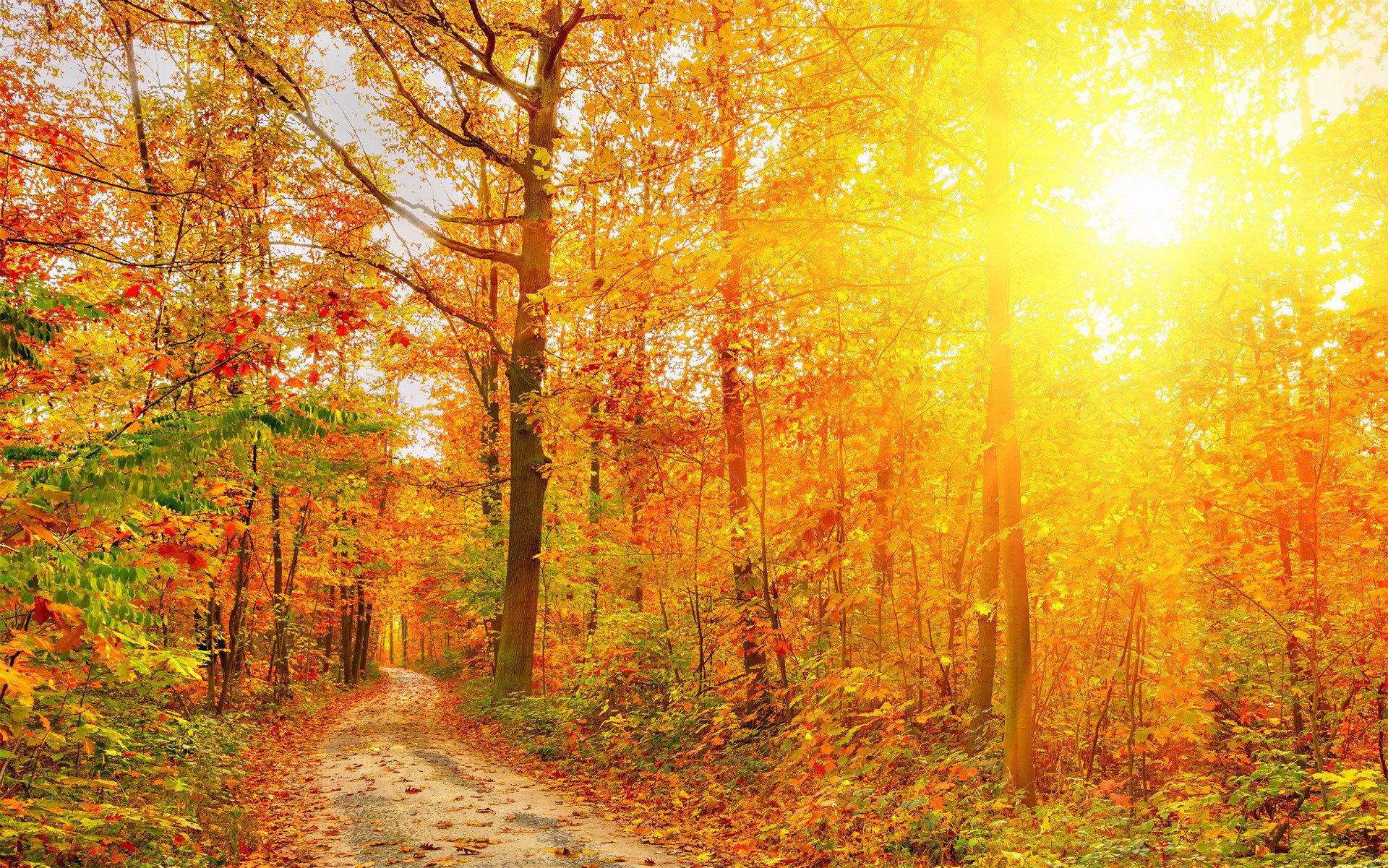 生活充满阳光的情感励志语录:你要相信世界美好