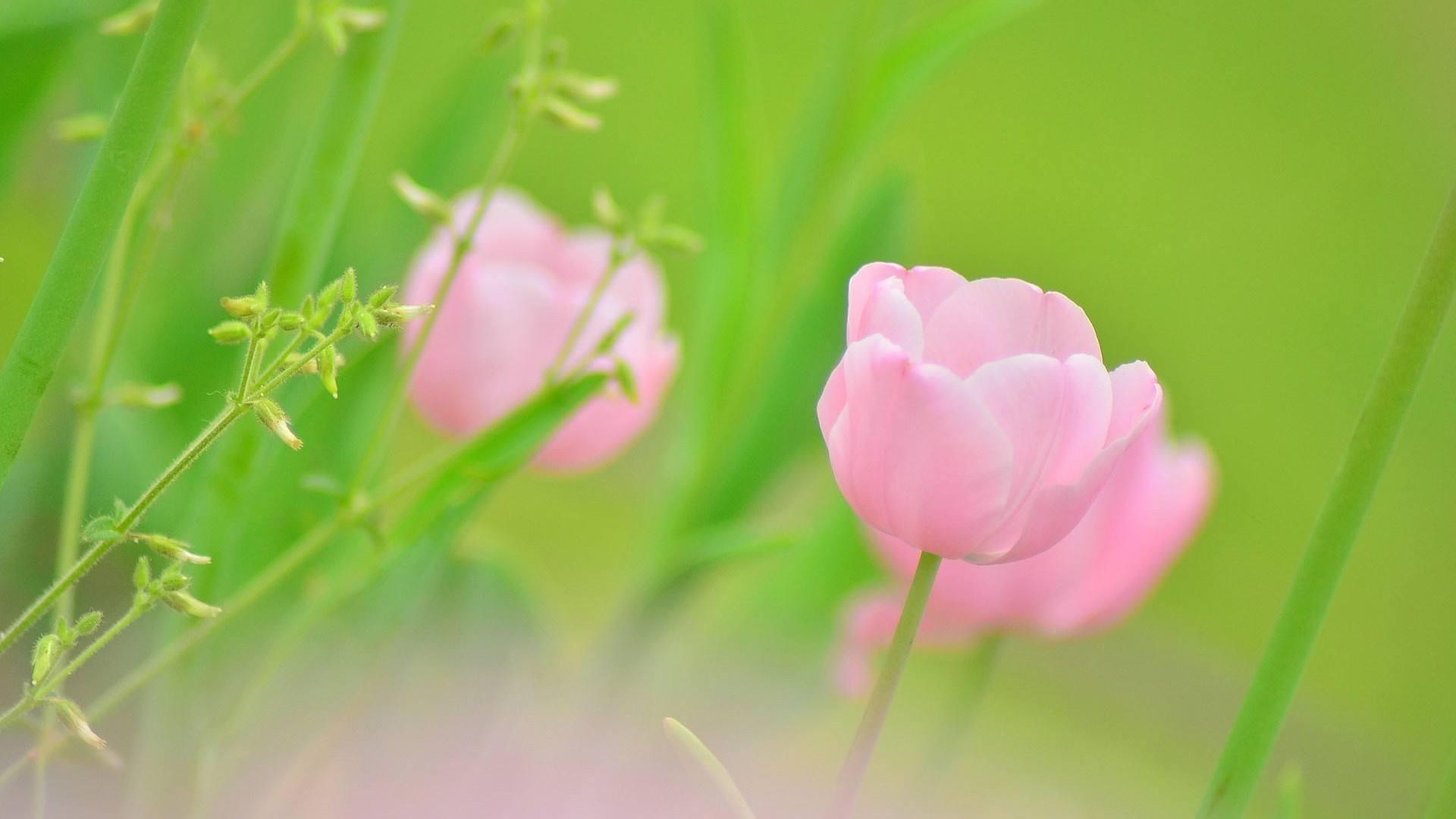 追求梦想坚强的正能量语录说说:我不可以流泪,因为我要坚强