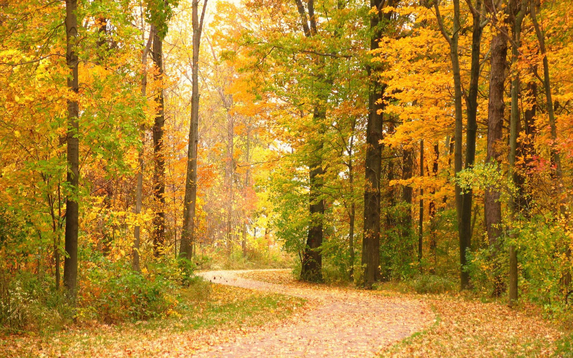 关于秋天落叶的散文900字