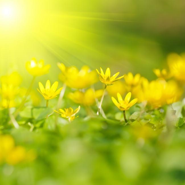 早安一句话正能量经典语录:成长中,我学会了坚强