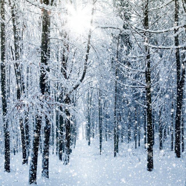 关于冬天写雪的作文8篇