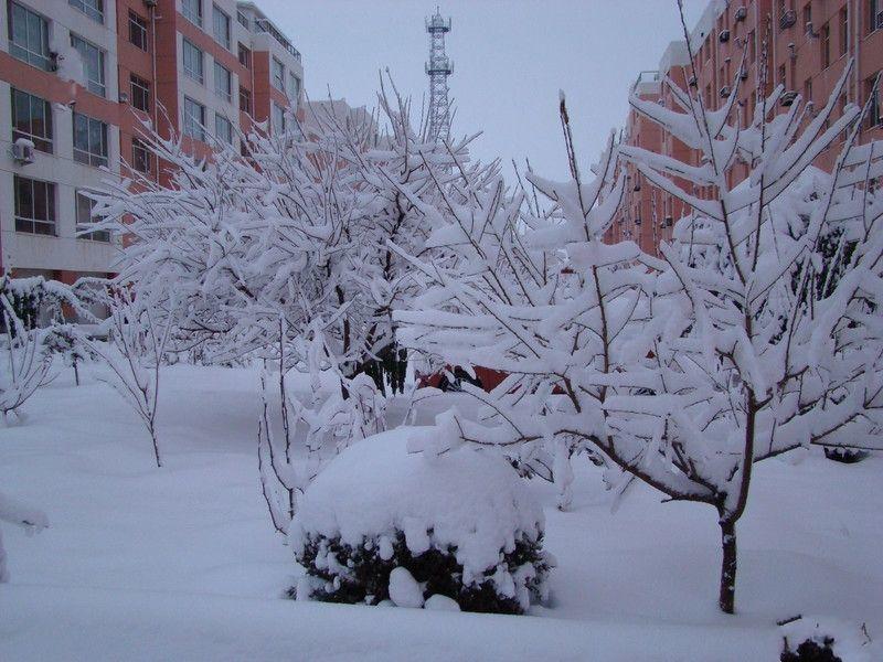 北方的大雪优美散文随笔