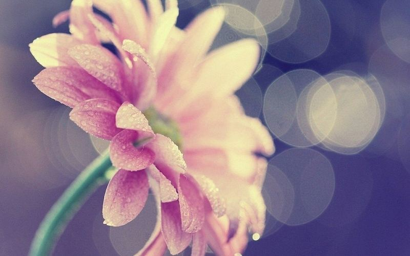追逐梦想的优美句子正能量说说:人间真的很值得