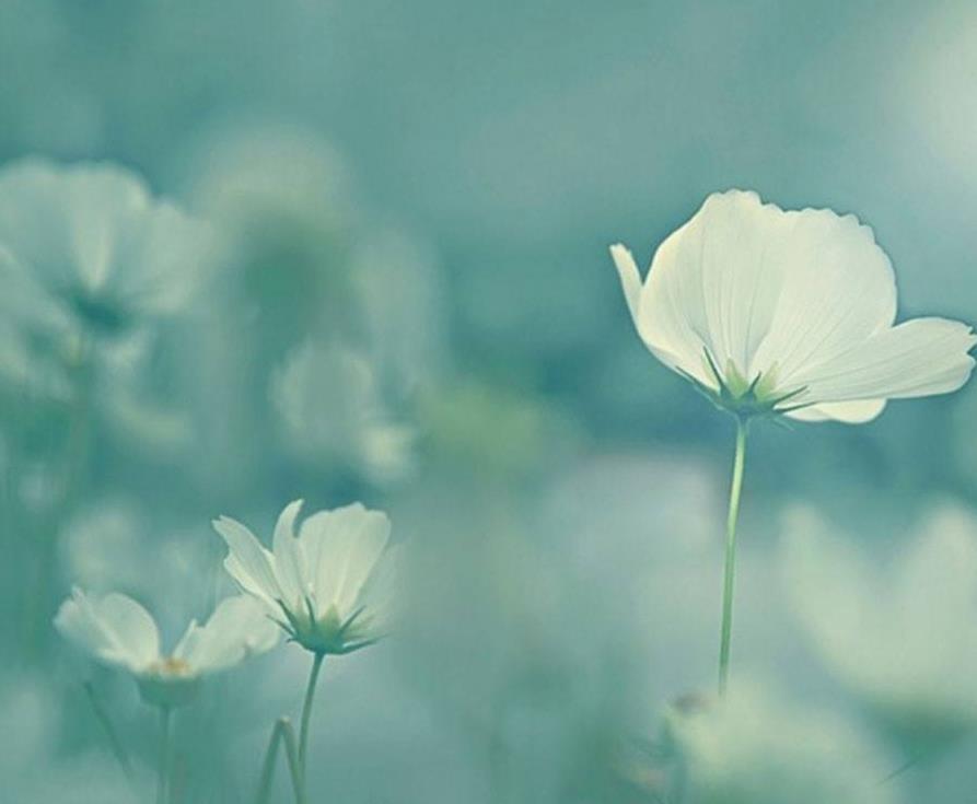 遗憾的爱情伤感说说心酸的情感句子欣赏