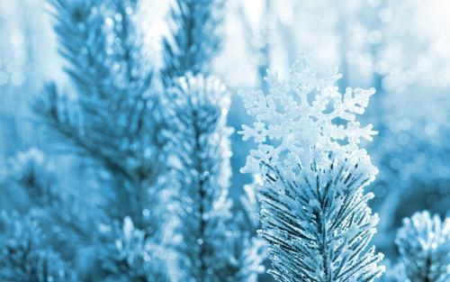 关于冬天的抒情散文:我爱冬天