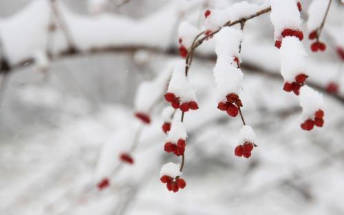12.7大雪节气养生短信祝福语澳门威尼斯人在线娱乐