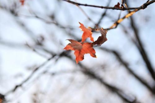 关于冬初秋末的抒情散文:秋天,我以这种方式告别