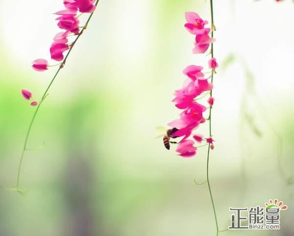 正能量清新文艺的句子说说:人生大胆的向前走吧