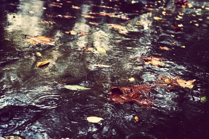 描写冬雨的抒情散文600字