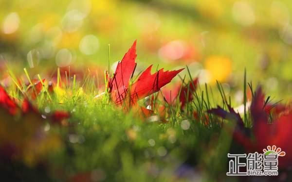 学着长大的正能量人生感悟语录:那些苦难,欢乐,让你成长