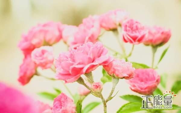 人生需要坚持的生活感悟语录说说:对自己好点,等着那个对的人