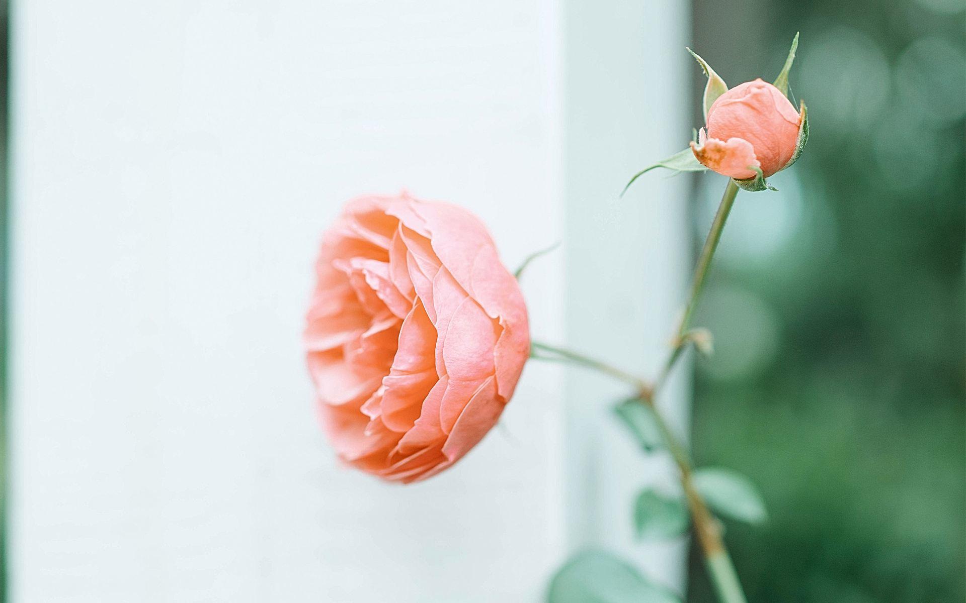 人生感悟成长蜕变的励志语录:世间岁月,苟且生存着
