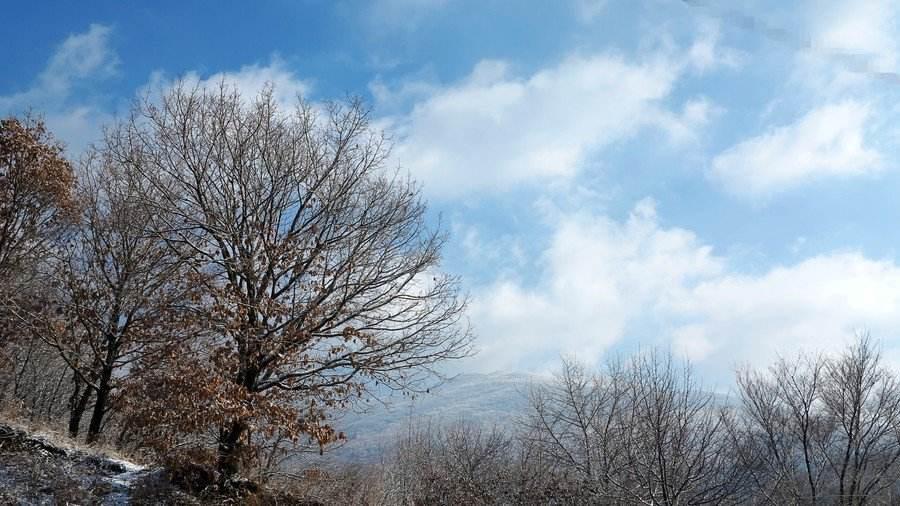 关于初冬的抒情散文:立足初冬看落叶