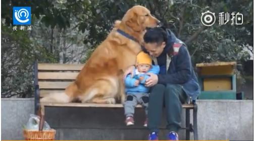 """重慶""""忠犬""""神技滿分:報數提菜陪小孩"""