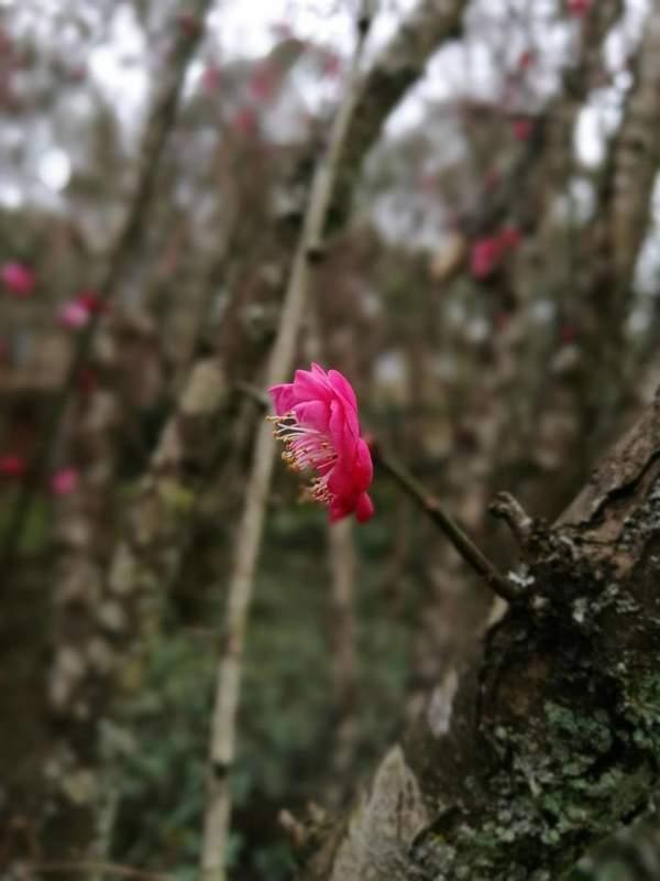 立春代表着什么?立春站在绽放的渴望里