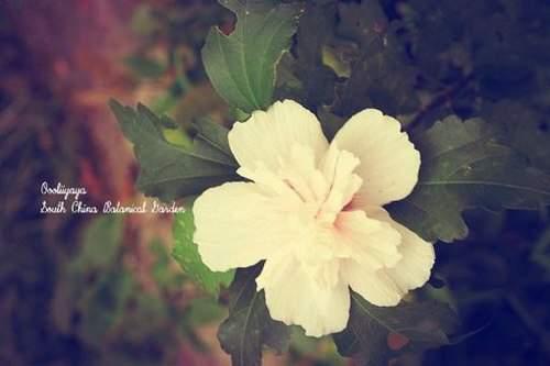 【结婚纪念日浪漫一句话】唯美浪漫的一句话情话送最爱的人