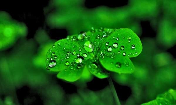 描写春雨的作文:春雨夜行