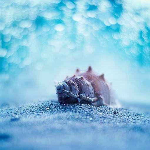 描写雪后景色的诗句_描写雪的诗句,雪后的世界大概就是传说中童话世界
