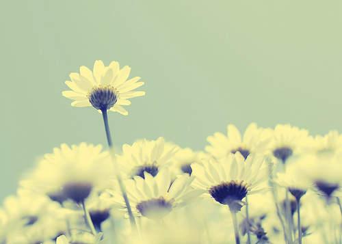 最美的光 最美最能触动人心的情话短句,送给异地恋的你