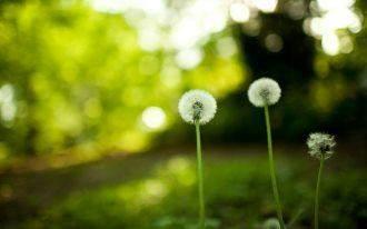 感悟人生哲理的文章 关于感悟人生的文章---留给你的都是温柔