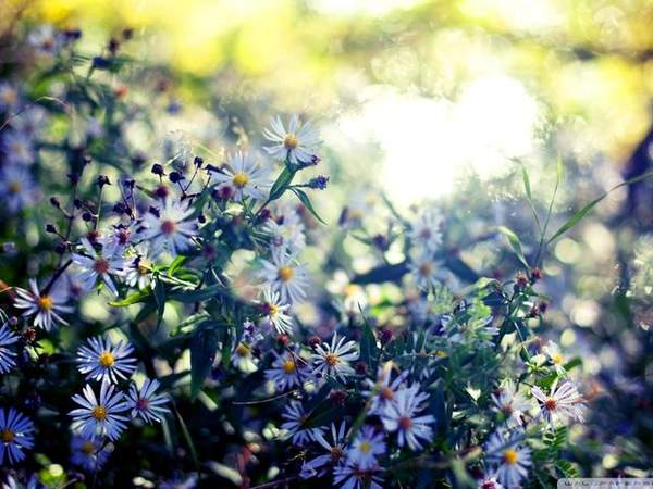 描写春风的诗句摘抄大全