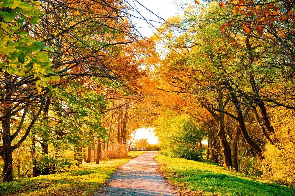 描写秋天的词语集锦