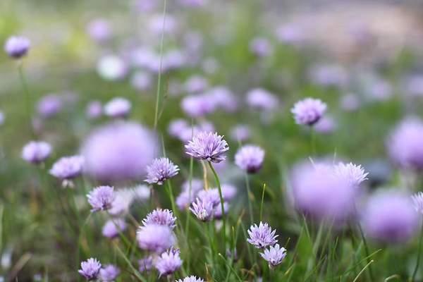 【陌上花开什么意思】陌上花开,留一地芬芳