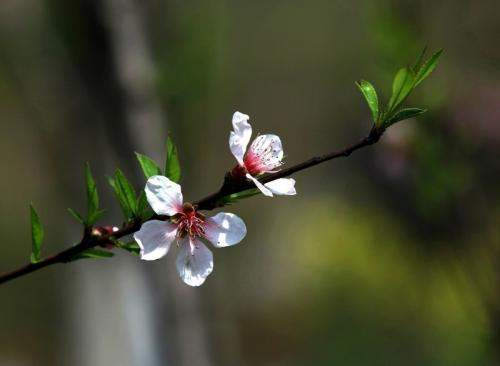 四月,期待你永远温暖如春
