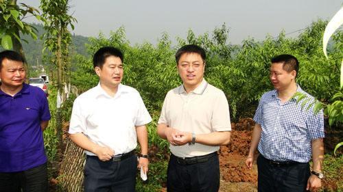 1963年10月下旬和11月中旬,团中央青农部分别在()召开了两次