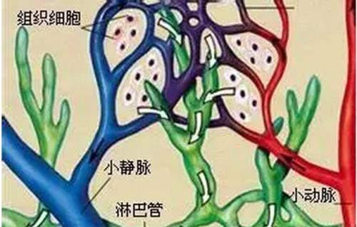 以下促进肢体淋巴管回流的因素中,不包括A、淋巴管内壁有指向心脏方向的瓣膜