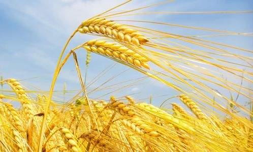 """""""十二五""""期間,該市糧食總產量在以下哪個范圍?"""