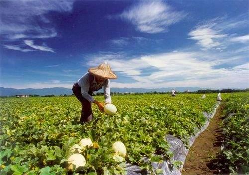 农作物的转基因安全评估不包括以下哪个项目:( )  A:遗传稳定性