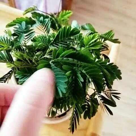 关于植物的作文300字范文欣赏